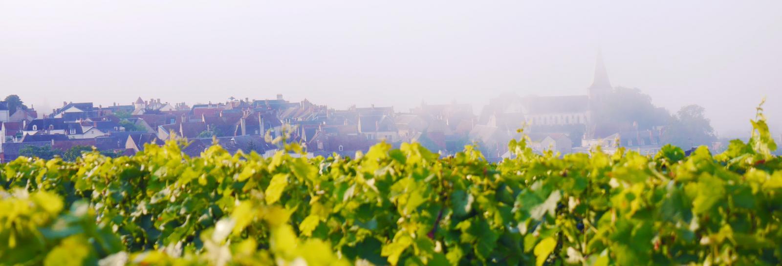 Pouilly brouillard